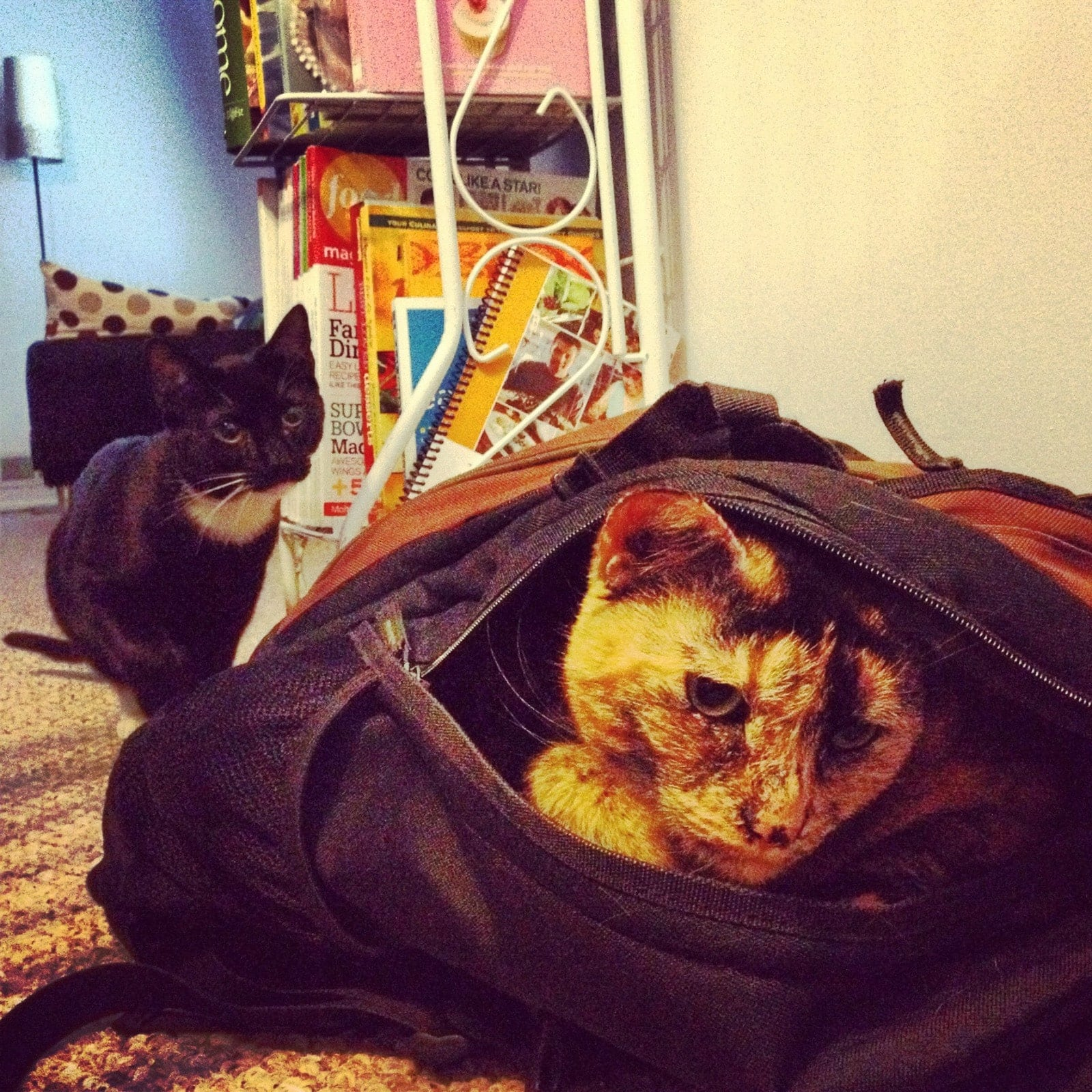 Leela in a bag with Fry watching