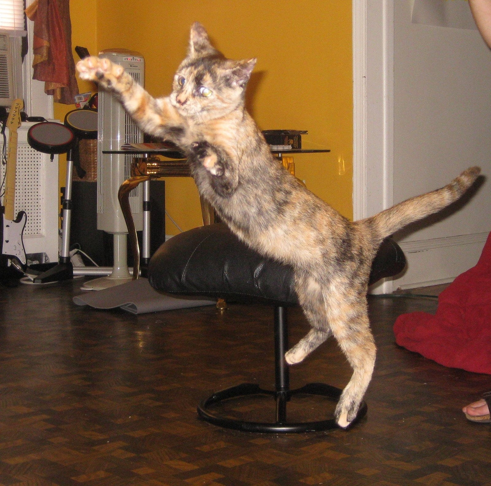 Leela as a kitten jumping in the air